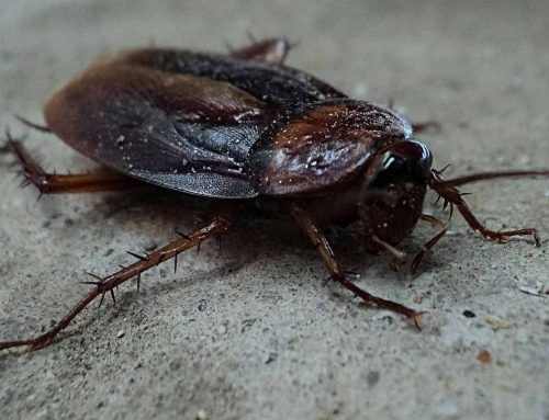 Homeless Family Left in Cockroach Infested Homes